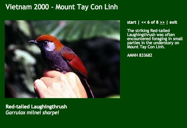 tay-con-linh-birds